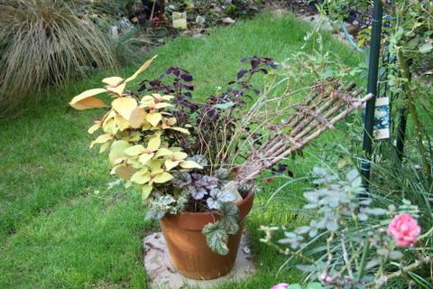 トレリスが折れた斑入りノブドウの鉢