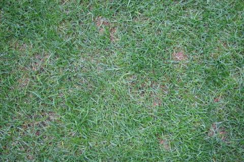 日当たりが悪い部分の芝の状況