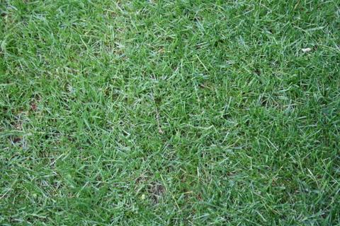 日当たり良好部分の芝