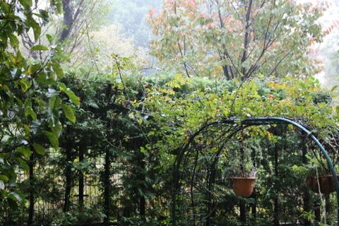 雨の庭と公園