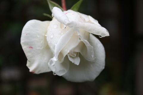 新雪 2009/11/18