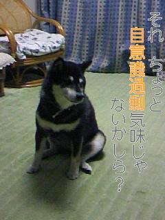 20081106233919