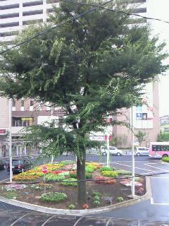 200907311024000母の木