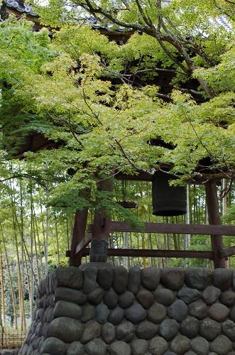 DSC_8231修善寺2