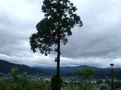 IMGP2677tree.jpg