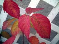bberry08.jpg