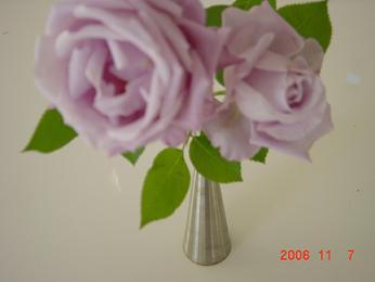 20061110211813.jpg