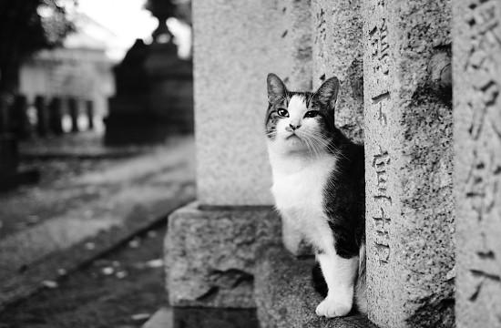 A Photo from Syama's Street Cat's Blog