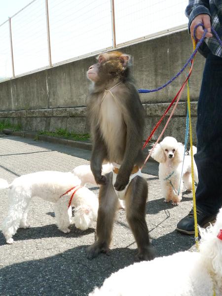 犬猿の仲 大の仲良し3