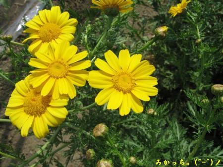 IMG_2626s2006.5.8.jpg