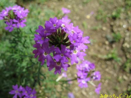 IMG_3001s2006.6.17.jpg