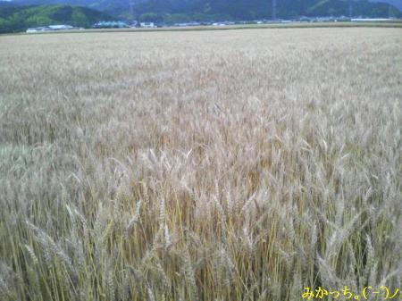 P1060009s2006.6.10.jpg