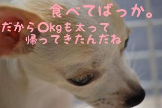 DSC_0341_469.jpg