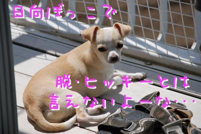 DSC_3265.jpg