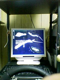 moniter2006.jpg