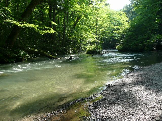 奥入瀬渓谷1