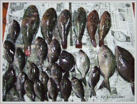 2008釣り大会