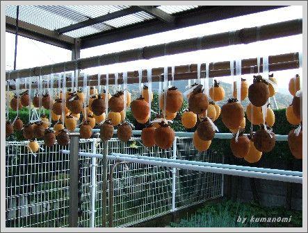 2008吊るし柿