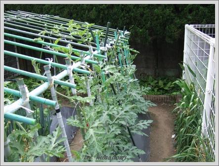 2009棚栽培