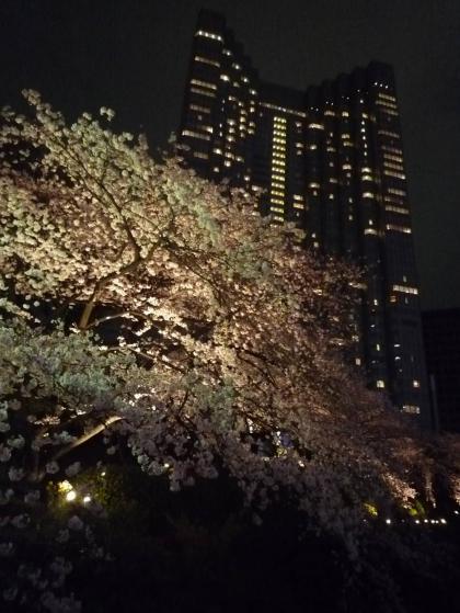 都会の夜桜@赤坂プリンス