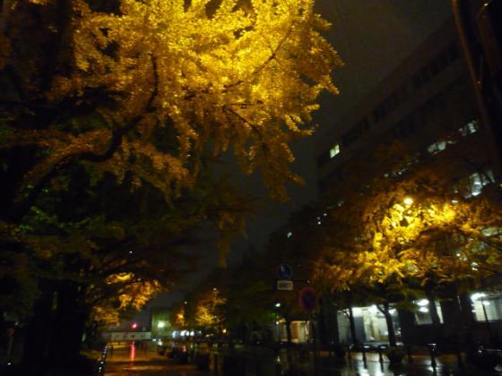 紅葉がキレイな日本大通り@横浜