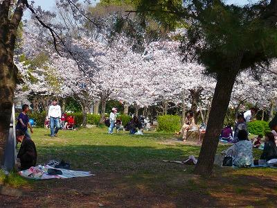 2146美桜公園 (4)