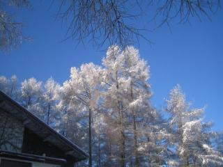 ささやかながら雪景色・・・
