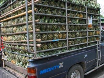 パイナップルのトラック