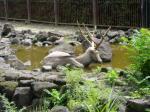 四園で一番ゆったり住んでいるとみえるシフゾウ
