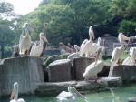 ペリカンの群れと麒麟、駝鳥