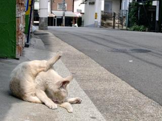 神戸の街猫1