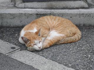 神戸の街猫2