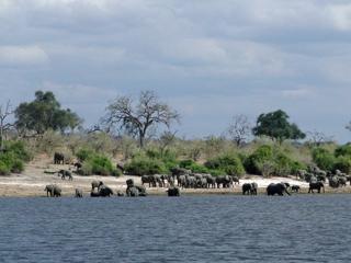 ゾウのビーチ