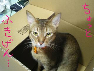 不機嫌箱入り猫