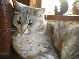 カモノセの猫1