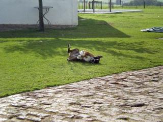 ダチョウ牧場の犬