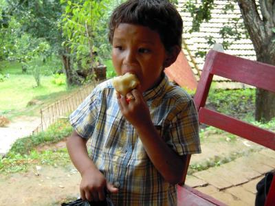 梨を食べる2