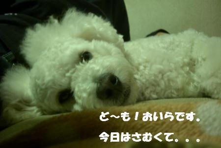 CIMG8157.jpg