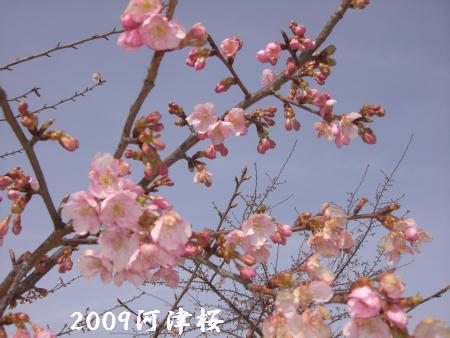 CIMG9296.jpg