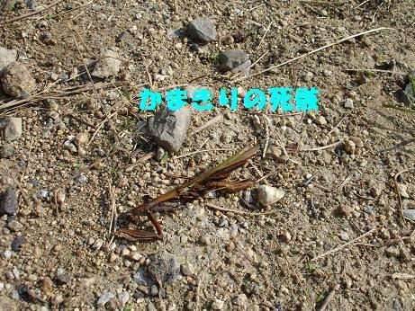 022_20091016101857.jpg