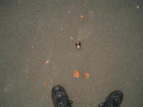 s2007_0811_060656AA.jpg