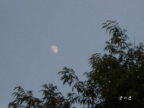夕暮れのお月様。