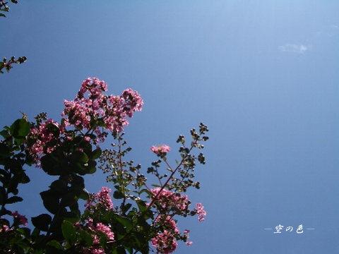 青空に映える百日紅。
