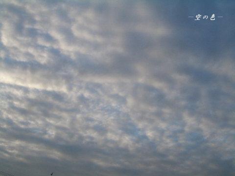 空を敷き詰める羊雲。