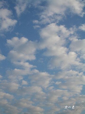 今日も広がる羊雲。