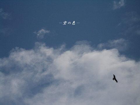 鳥の飛ぶ空。