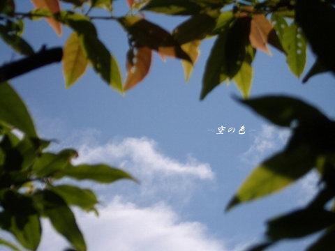 葉のフレーム