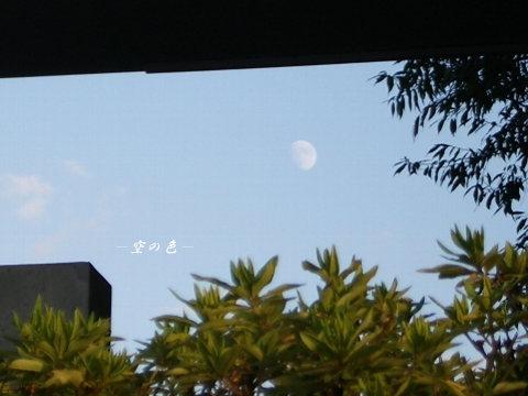 お月様、み~つけた♪