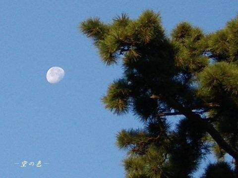 松と並んだお月様。