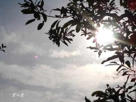 陽がまぶしい時には、木のシルエットが綺麗。